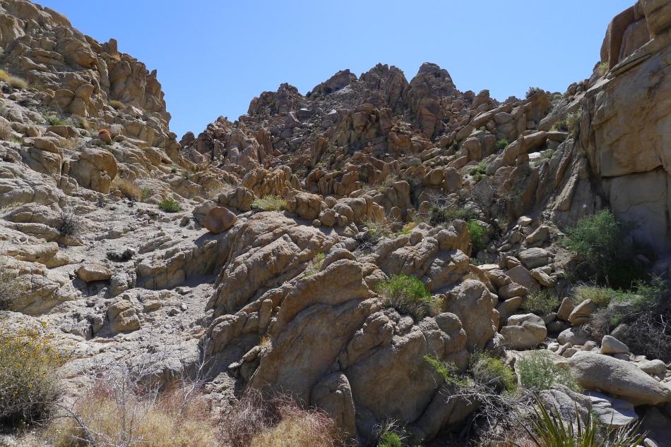 Website Design by Roger Gervin Hike the Maze Loop Trail in Joshua
